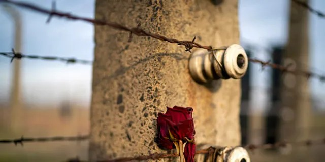 A memorial rose is left on the electric fence of the Auschwitz II-Birkenau extermination camp on December 19, 2019, in Oswiecim, Poland. (Photo by Christopher Furlong/Getty Images)