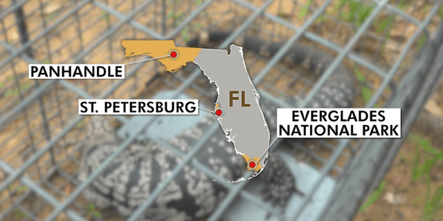 Map shows areas in Florida that have been impacted by Tegu lizards