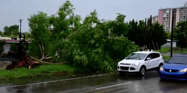 A large tree toppled by tropical storm winds is seen in Alto Trujillo, Puerto Rico, on Thursday. (AP)
