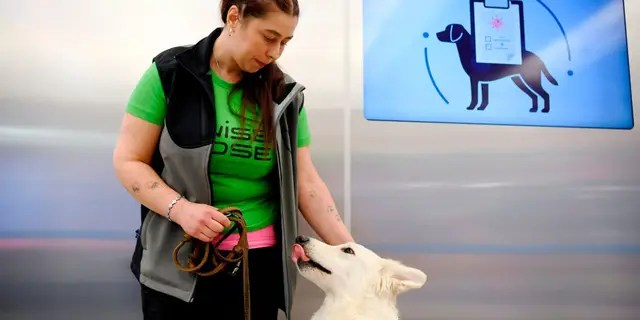 The dogs will mainly be used to test travelers arriving from outside the country.  (Antti Aimo-Koivisto / Lehtikuva via AP)