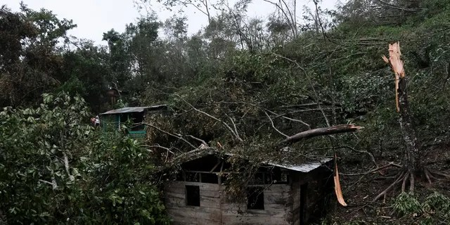 Fallen tree branches cover a house after the passage of Hurricane Iota in Siuna, Nicaragua, Tuesday, Nov. 17, 2020. Hurricane Iota tore across Nicaragua, hours after roaring ashore as a Category 4 storm along almost exactly the same stretch of the Caribbean coast that was recently devastated by an equally powerful hurricane.