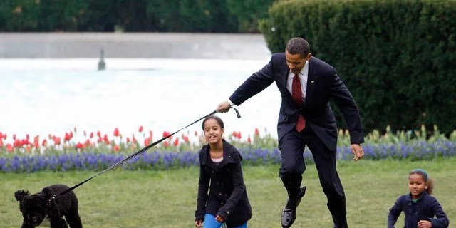In this April 14, 2009, file photo President Barack Obama is almost jerked off his feet as he shows off their new dog Bo, a 6-month-old Portuguese water dog with his daughters Malia, left, and Sasha Obama, right, on the South Lawn of the White House in Washington.  (AP Photo/Ron Edmonds, File)