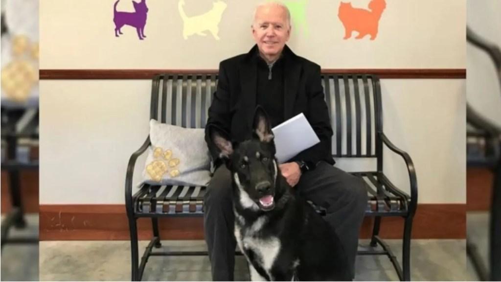 Biden's rescue dog Major to receive 'indoguration' ceremony