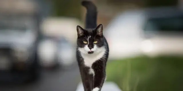 A condominium association in Florida is suing a 78-year-old woman for feeding a stray cat.  (Getty Images / iStockphoto)