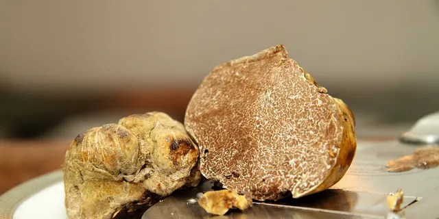 Researchers may have found a way to cultivate expensive white truffles worldwide.  (IStock).