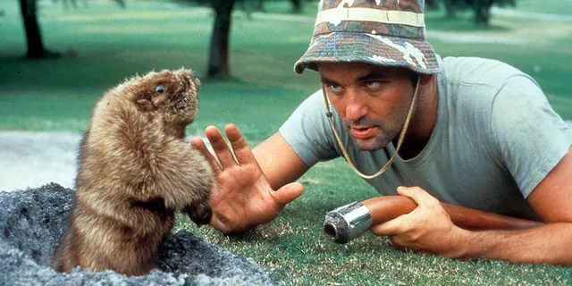 Bill Murray eye to eye with a gopher in a scene from the film 'Caddyshack', directed by Harold Ramis, 1980.