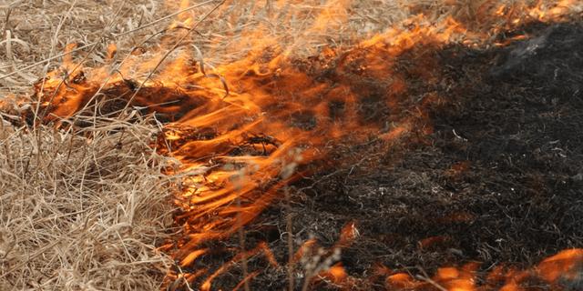 A forest fire in Alberta, Canada.