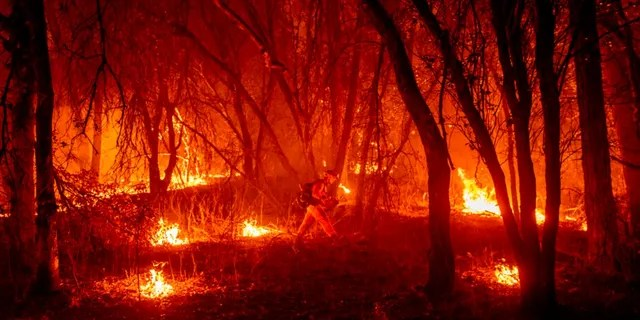 An inmate firefighter from the Trinity River Conservation Camp uses a drip torch to slow the Fawn Fire burning north of Redding, Calif. in Shasta County, on Thursday, Sept. 23, 2021.