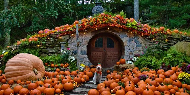 If you're looking for a spot to arrange a festive photo shoot, here's a gourd-eous spot where visitors can reserve a half-hour time slot to check out the Hobbit House.