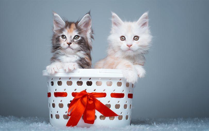 Cute Wallpapers Of Kittens And Puppies صور قطط جميلة خلفيات هره كيوت احبك موت