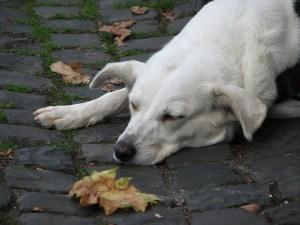 dog-455651_640