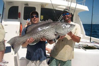 gag grouper caught deep sea fishing