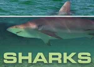 Sharks WKRG