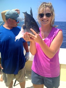 gulf of mexico sharks snack of grey triggerfish alabama deep sea fishing
