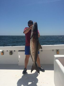Big cobia caught with Captain Ben Fairey on the AL Gulf Coast Spring 2015
