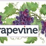 Grapevine