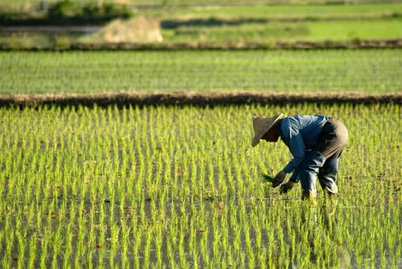 民泊農家 沖縄 田舎 サイト