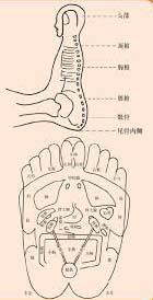 acupuncture blog Reflexology-5