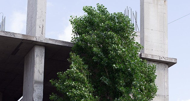 How to Keep Safe Trees from Construction Damage