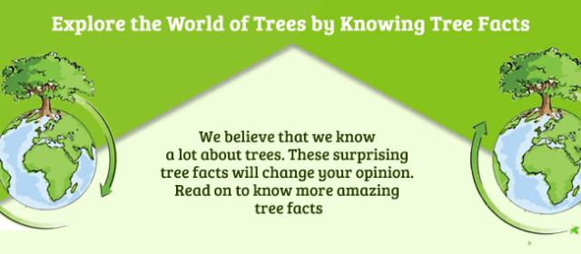 UNBELIEVABLE TREE FACTS [Infographics]