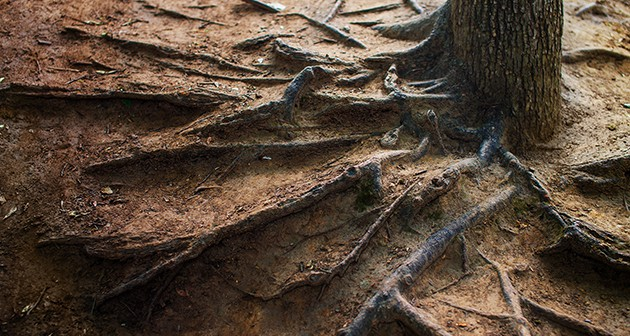 Ultimate ways to cover exposed tree roots