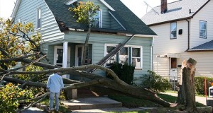 Figure Out the Right Ways to Deal with Storm Damaged Trees