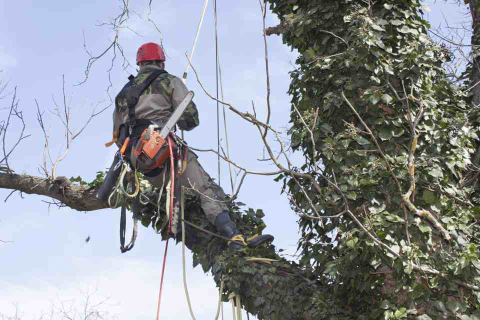 Are You Skeptical About Cutting Dead Branches for Better Tree Health?