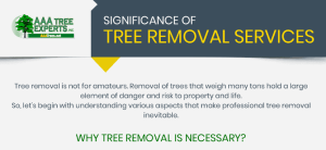 Significance of Tree Care Services