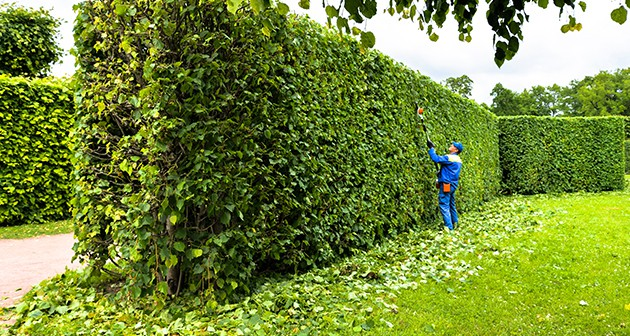 Spring Tree Branch Trimming Tips for Homeowners
