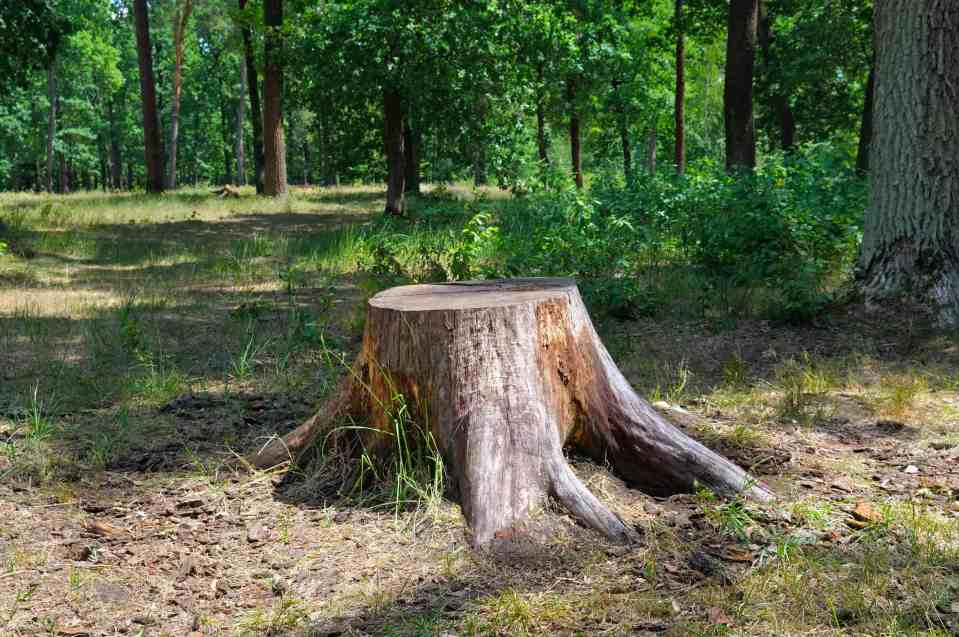 Shoo Stump! Everything You Need to Know About Stump Removal