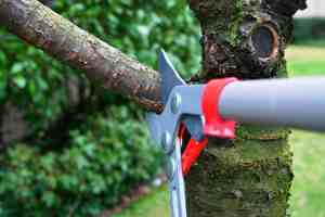 Proper Tree Pruning Charlotte, NC