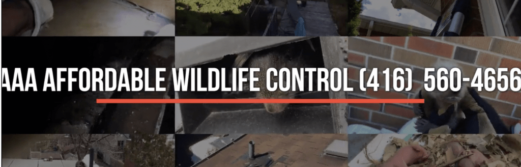 AAA Affordable Wildlife Control Reviews, Wildlife Control Toronto Company