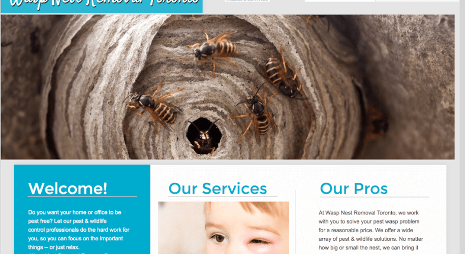 Wasp Removal, Wasp Nest Removal Near Me, Wasp Nest Removal Toronto Cost, Affordable Wasp Nest Removal