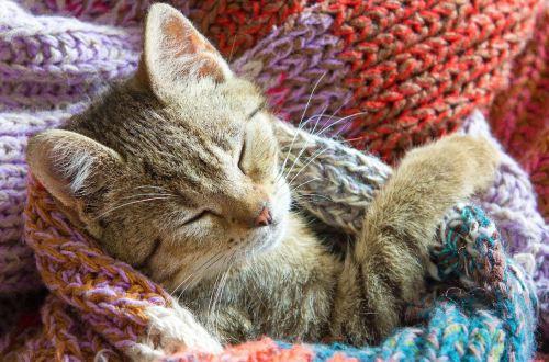 crochet cat beds