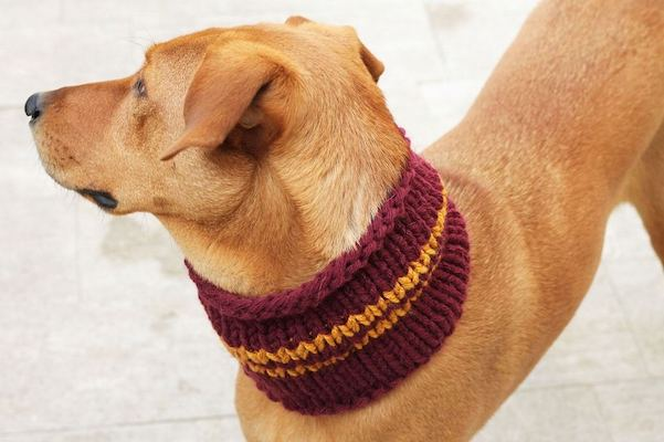 dog cowl pattern