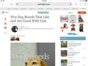 Image of web page about dogs who are good with cats
