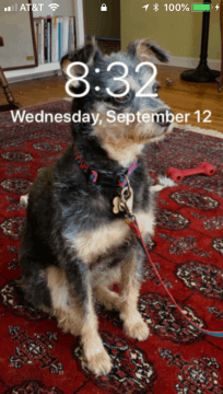 Image of a dog on an iPhone home screen