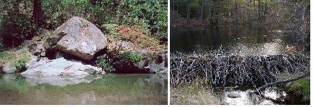 otter holt and beaver dam