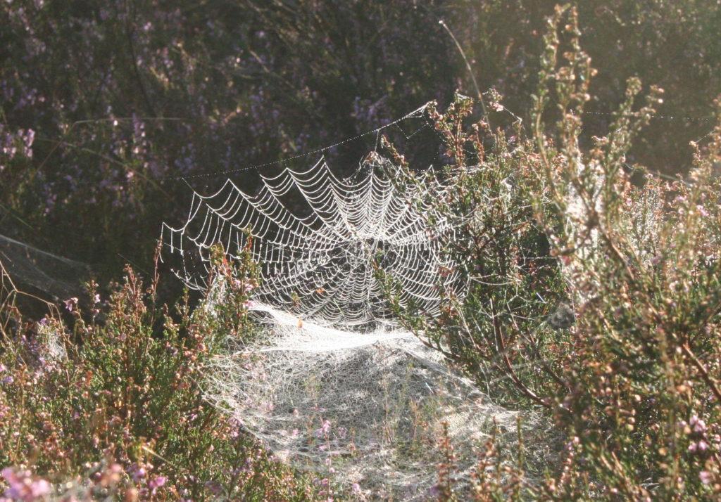 Spinnen websoorten