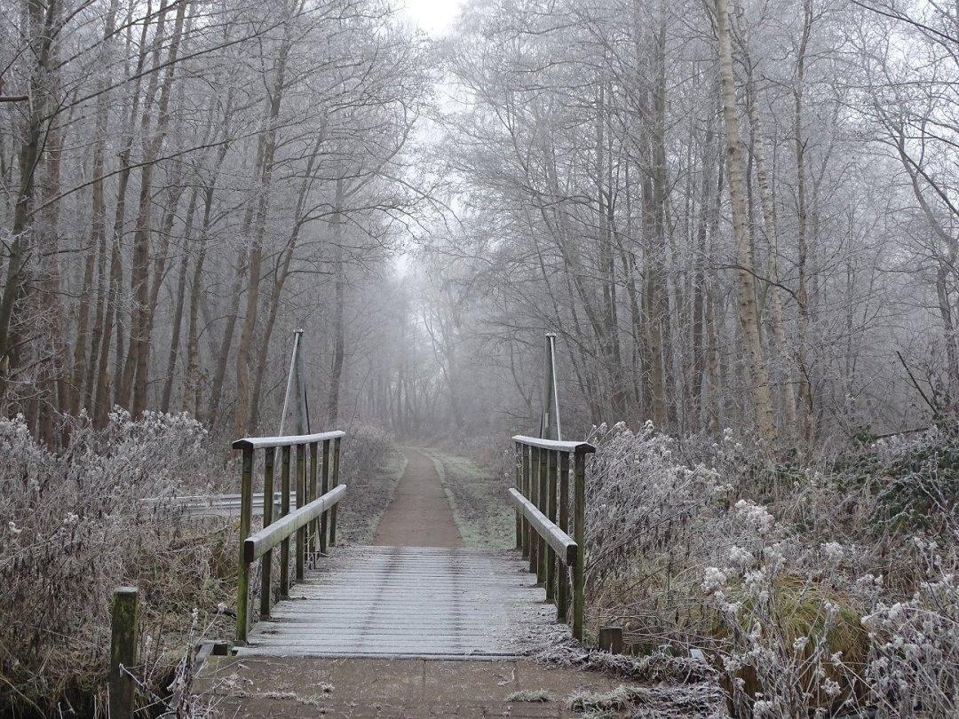 Het bruggetje in het Kooibomenpad