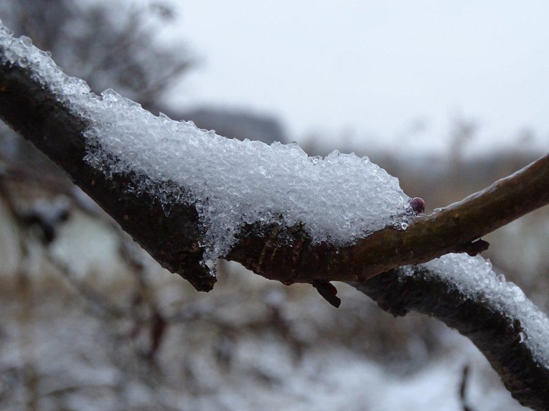 Sneeuw en IJzel in macro
