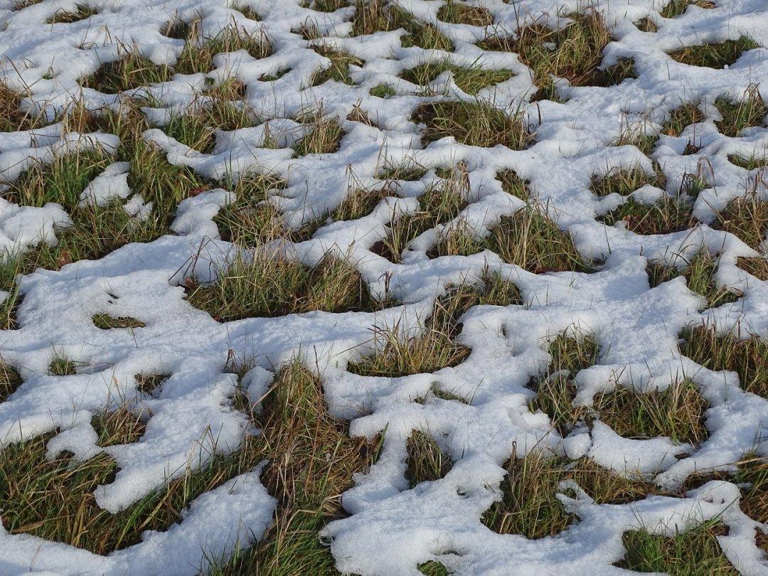 Ontdooiende sneeuw