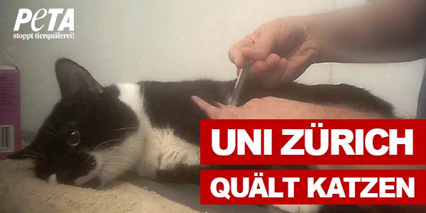 Uni Zürich                                                     quält Katzen
