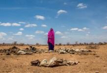 AXA African Union ξηρασία