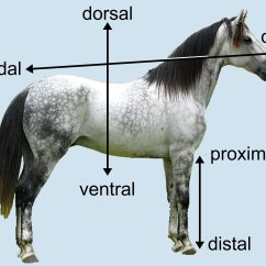 Horse Neck Diagram How To Draw A Wiring Cat Manuals Silver 1 Introduction