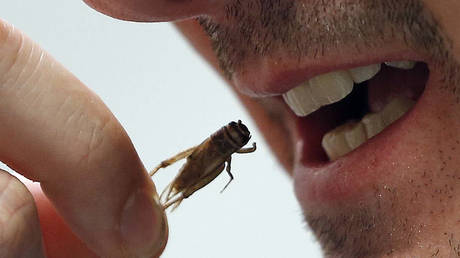 An employee eats a cricket at the Micronutris plant in Saint Orens de Gameville, southwestern France, February 24, 2014 © Reuters / Regis Duvignau