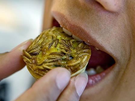 یورپی ایجنسی برائے خوراک نے حشرات کی بطور خوراک منظوری دے دی