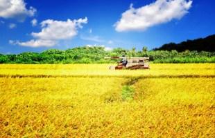 農業ワールド
