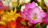 most-beautiful-flowers-40-photos-26