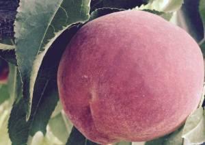 Summer Prince Peach